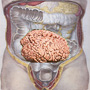 intestino_naturopatia